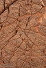 Close-up of a reddish-brown canyon wall filled with fine lines, almost like cracked mud. (3/20/2013, Titus Canyon, Death Valley NP)<br /> EF24-105mm f/4L IS USM @ 70mm f/8 1/160s ISO1250