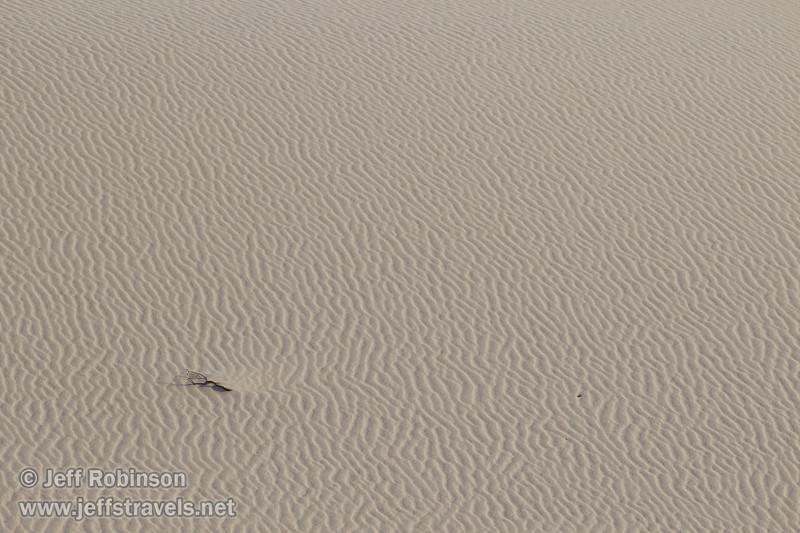 (3/10/2016, Eureka Dunes, Death Valley trip)<br /> EF100-400mm f/4.5-5.6L IS II USM @ 340mm f/8 1/640s ISO200