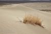 (3/8/2016, Eureka Dunes, Death Valley trip)<br /> EF24-105mm f/4L IS USM @ 50mm f/11 1/50s ISO100