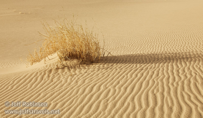 (3/8/2016, Eureka Dunes, Death Valley trip)<br /> TS-E45mm f/2.8 @ 45mm f/11 1/250s ISO320