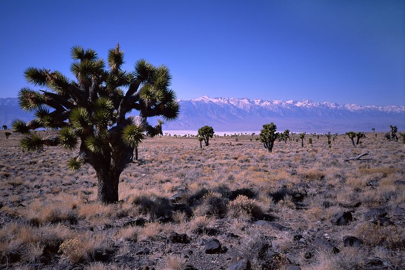 Malpais Mesa lies outside the park in the Inyo Mountains and offers a view of the eastern Sierra.