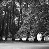 Stubber Wald mit Blick auf Gut Krieseby