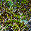 Evolution Meadow Flora