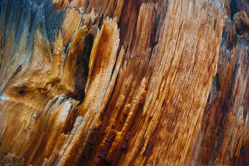 Tree Stump Detail #1