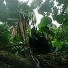 Anhinga in Nest