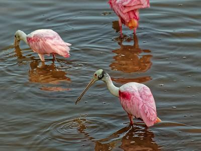 Everglades (South 2)