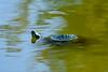 Turtle-8468