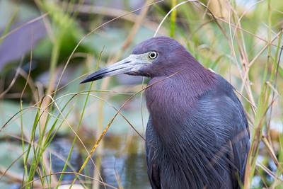 2013_12 Everglades National Park