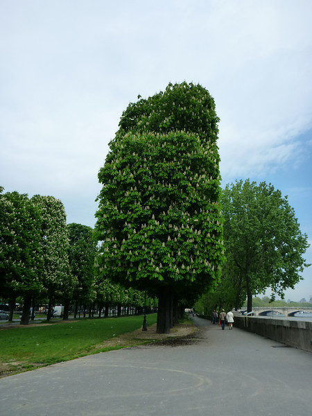 Sculptured trees everywhere