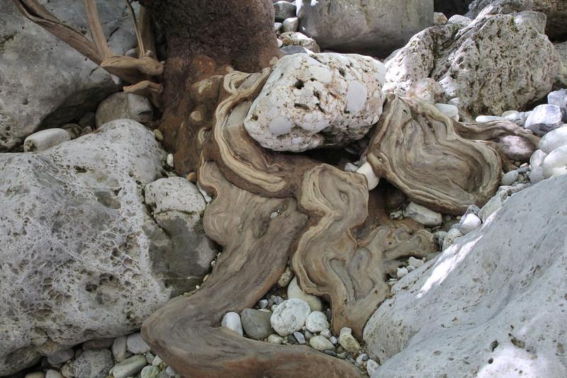 Tree-trunk, Mili Gorge, N of Kambos,  Kalathio mountains, Mani,