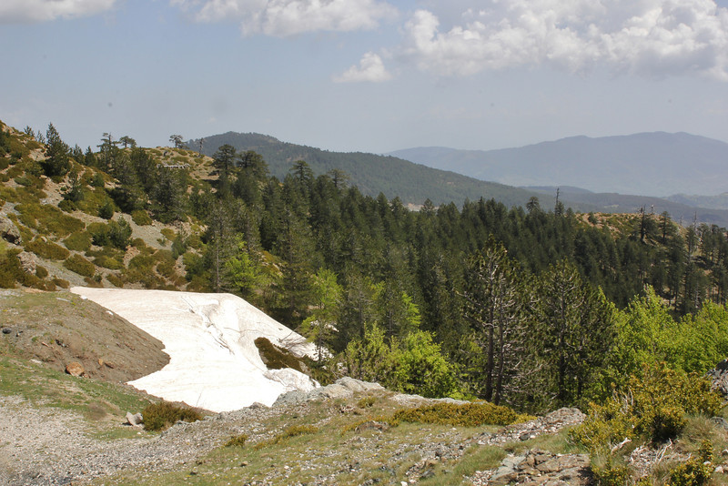 partially serpentine, Kataras Pass 1690m, N of Metsovo