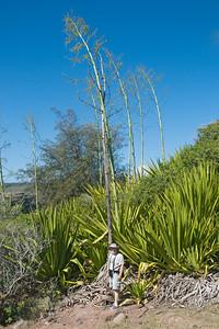 Earl and Century Plant - Maui, HI