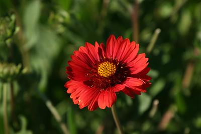 Flowers-Seeds