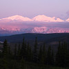 The very pink Alaska Range, with Wonder Lake off in the distance.
