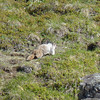 The Marmot Valley hiked lived up to its name as we had several good marmot sightings.