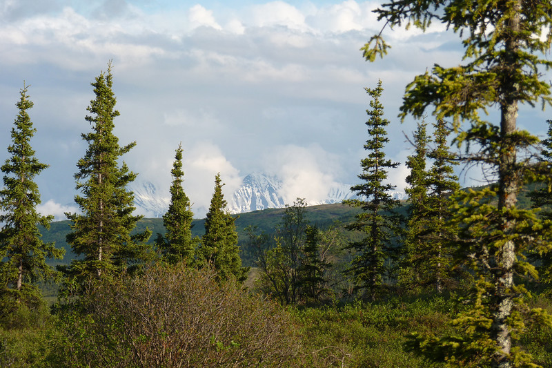 Back at Camp Denali, after several days of starting-to-feel-oppressive clouds, we get our first glimpse of the foothills of the Alaska Range.