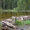 Day 3 - 6/11/2012: We start the morning with an easy hike to Horseshoe Lake.  We admire the beaver dam there.