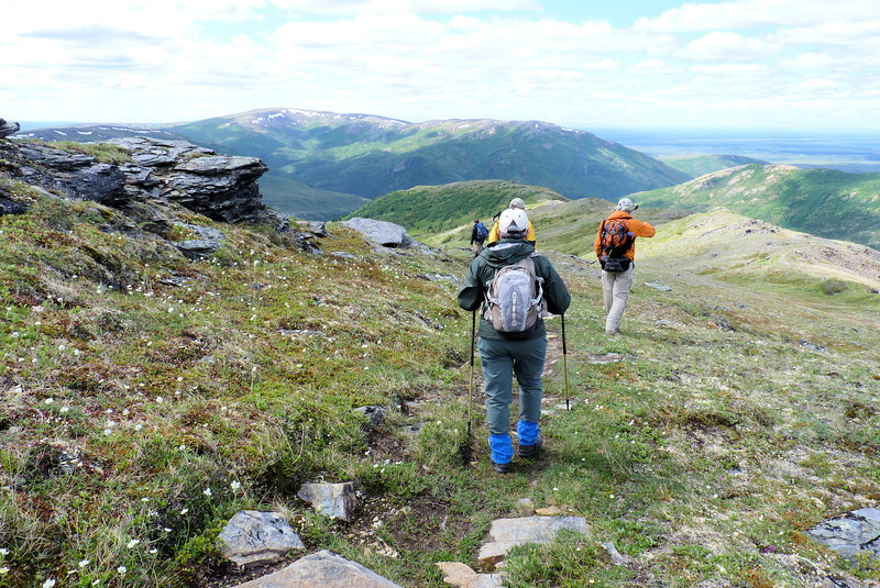 After lunch we follow our tracks back toward Camp Denali.  We start with an easy meander down Camp Ridge, in a meadow filled with anemone.