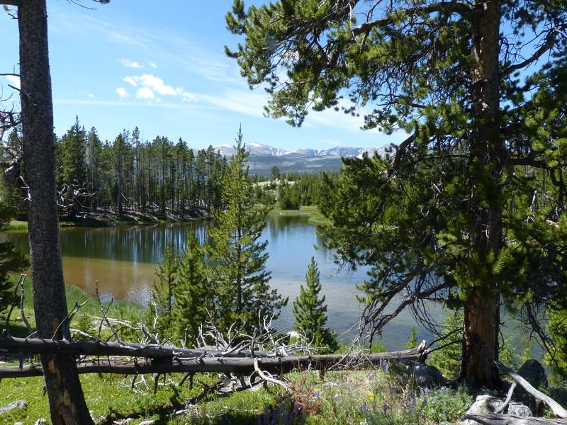 Pretty little beaver pond