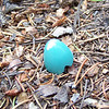 We find a pretty blue egg on the path between our camp and the lake.