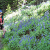We backtrack from Mirror Lake to the West Tensleep Trailhead, then switch trails to head North. The first part of the trail meanders through Lupine-filled woods.