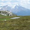 Lovely alpine meadow on the Helen Lake trail.