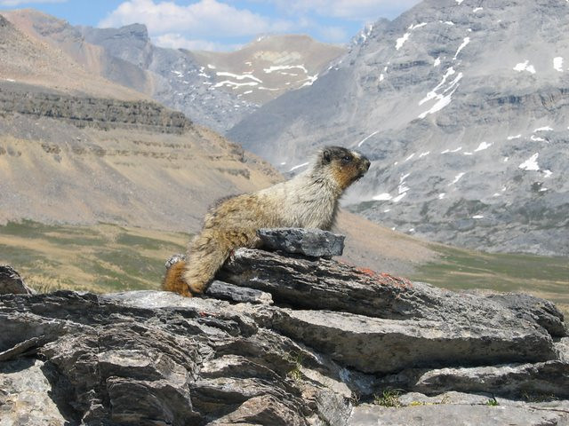 Joel sent us his version of the marmot photo...his shows much more of the surrounding land!  Photo by Joel Hagan of Great Divide Nature Interpretation
