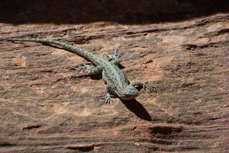 Arizona is full of lizards!