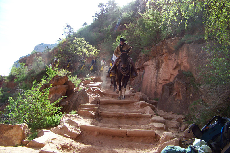 While we take our first long rest break just past the Three-Mile Resthouse, a mule train comes down the trail.  The constant mule traffic leads to a trail full of tall steps and deep ruts.