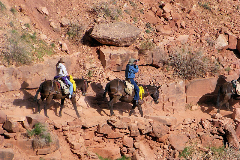 Crazy man who is relaxed enough to take photos from his mule's back...Patti would be a nervous wreck!