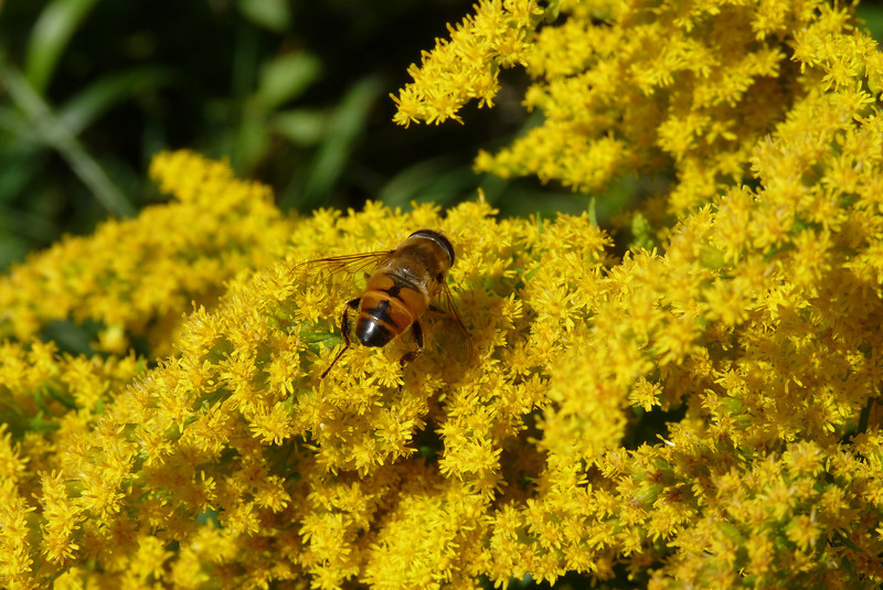 Here's one bee being busy.