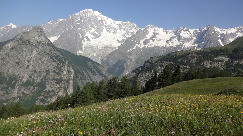 Prototypical alpine meadow, with Mont Blanc in the background