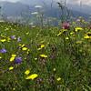 Very nice meadow