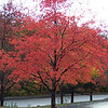 We admired this brilliant red tree in Franconia Notch State Park