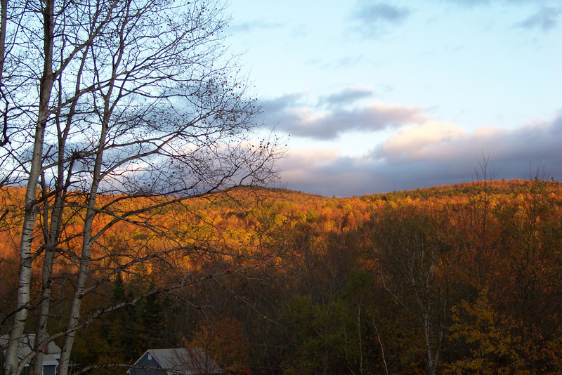 The last remnants of sunshine light up the trees on our drive back to Vermont after our New Hampshire hike.