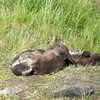 Video - Otters squirming
