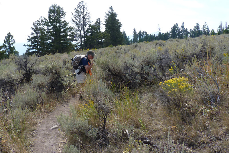 Our noses always find it delightful to be surrounded by this much sagebrush.