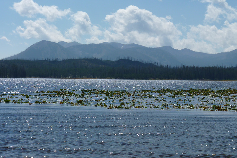 Riddle Lake is big and beautiful, dotted with lily pads.