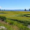 This beautiful marshy area is Pelican Creek, on the northeastern side of Yellowstone Lake