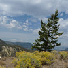 We hike mostly through sagebrush habitat, and the rabbitbrush is in full bloom.