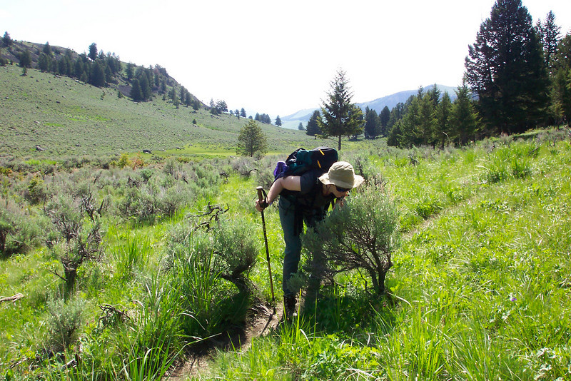 Our hike for the day is the Yellowstone River picnic area trail, in the far Northern reaches of the park.  Patti is stopping to enjoy the smell of the sage.