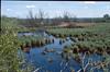 Nature Reserve Kis Balaton