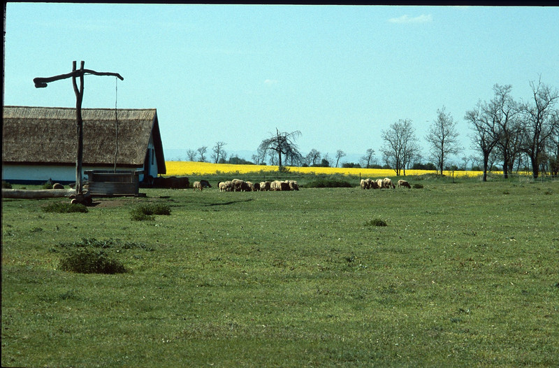 farm (Hortobagy National Park)