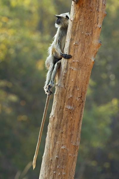 Just hanging around.