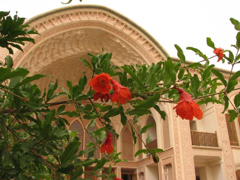 Punica granatum flowers (Kashan)
