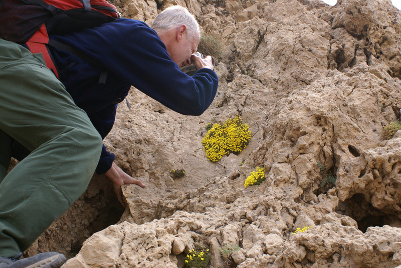Photographing Dionysia zetterlundii in the lime stone rocks (pass Charii, Bazoft valley)