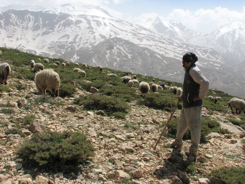 herdsman with sheep and goats (near Chelgerd, Zagros)