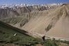 botanising on the slopes (Aligudarz - Khorramabad)