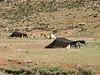 Siyah-chador (Nomad tents)