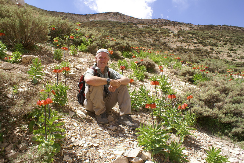 habitat of Fritillaria imperialis (Aligudarz - Khorramabad)